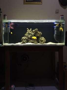 Aquarium 100 cm x 40 cm x 40 cm plus lampu 15 watt