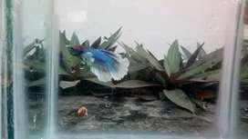Aquarium fishes and aquatic plants online