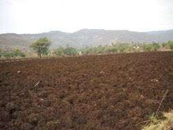 hinghanghat-bhopapur farm to sell 7.5 acre.