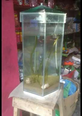 All types of fish food and accessories available