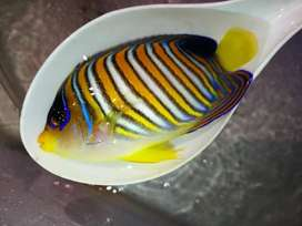 All types of saltwater fishes available. We also
