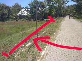 Jual Tanah Kavling/ Kapling Murah di Kuripan Purwodadi Grobogan