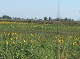 open land for agricultural
