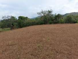 28 acre plain land and cardamom plantation for sale in sakleshpur