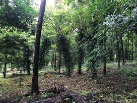 Agriculture Land For Sale in Palakkad