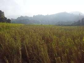 8 bigha miyadi land