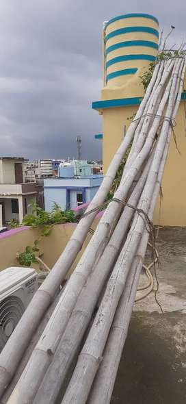 9 Bamboo poles around 55-60 feet in good condition for sale