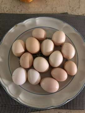 Quality Desi Eggs