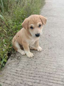 anak anjing usia 1,5 bulan