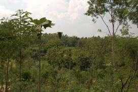 Di jual lahan tanah untuk perkebunan luas lebih kurang 1000hektar