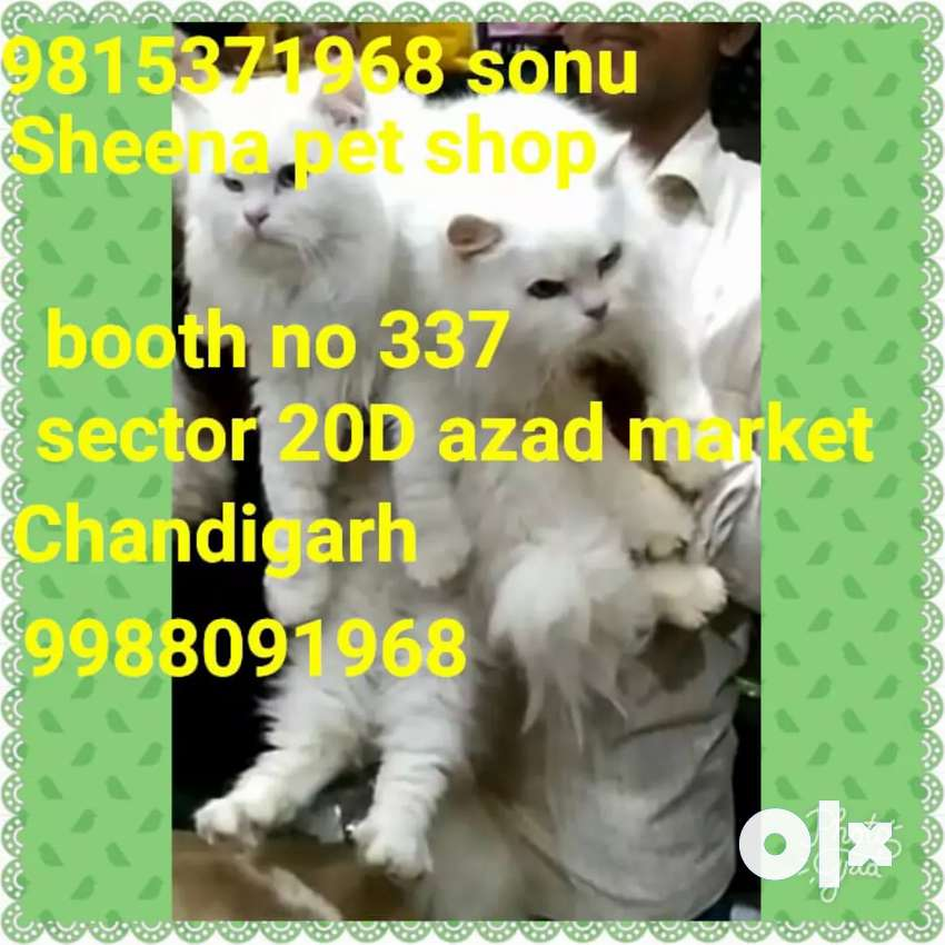 Cats available 0