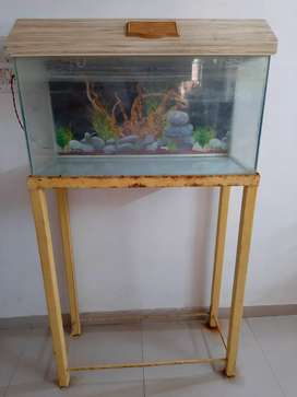 Fish Aquarium with Iron stand (Lights fitted)
