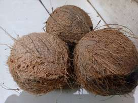 Any amount of fresh coconut for sale