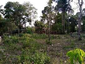 15 cent House plot in Nalukody, Changanassery