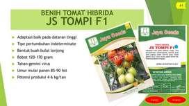 BENIH TOMAT HIBRIDA Varietas JS TOMPI F1