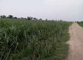 24 canal (3Acer) rakba for sale in  chak # 88A  Pakki bhani Khanewal.