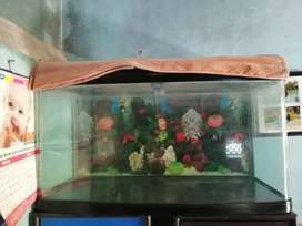 Fish impot tank with motor, from 2filter, heater and light