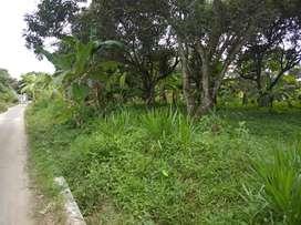 Tanah Rambutan Kenangan Sungai Binge Binjai