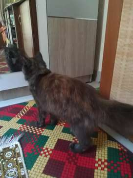 Open Adopt Kucing