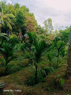 35 cents Land in Kadthala