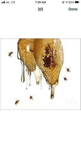 Honey for improve your immunity