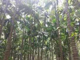 Ponda river touch property area around 10000 sqmt