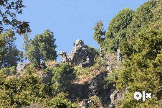 TRIP TO DHANAULTI & MUSSOORIE For 2D/1N Mountain and Nature Adventure 0