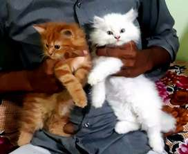 All types kittens and cats available