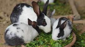 Rabits for sale