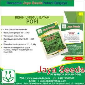 Benih Bibit Bayam Unggul Popi urban farming jayaseeds