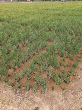 5 acres of agriculture land for sale