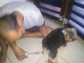 Grooming Home Anjing dan Kucing