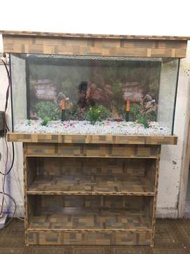 3 fit new aquarium