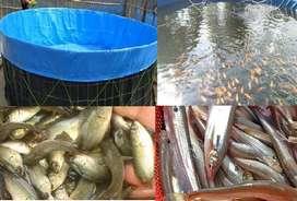 BIOFLOC fish farming apni ki korte chan