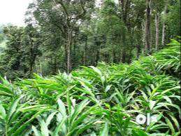 cardamom estate at wayanad for immediate sale.