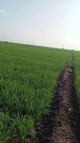 Di jual 4 petak sawah total 1/2 hektar nego