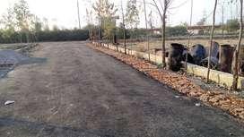 plots near Northen Peripheral Expressway