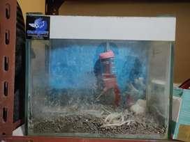 Aquarium second