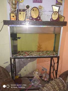 Aquarium with fishes,stand,filter,heater