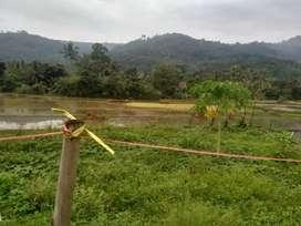 Tanah asri, subur, bisa buat pertanian, pesantren, villa