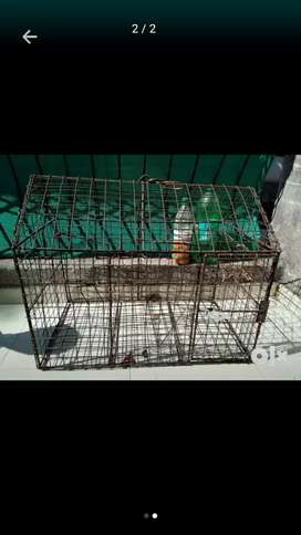 Cage urgent sell