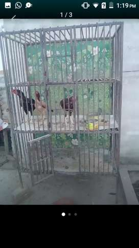 cage for hens sale