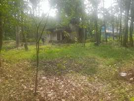 9.71 hector approximately 24 cent land and a house for sale  .