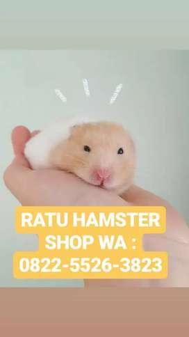 Hamster lucu unyu sekali