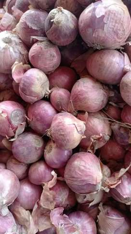 Fresh Onion. 65 RS per kg