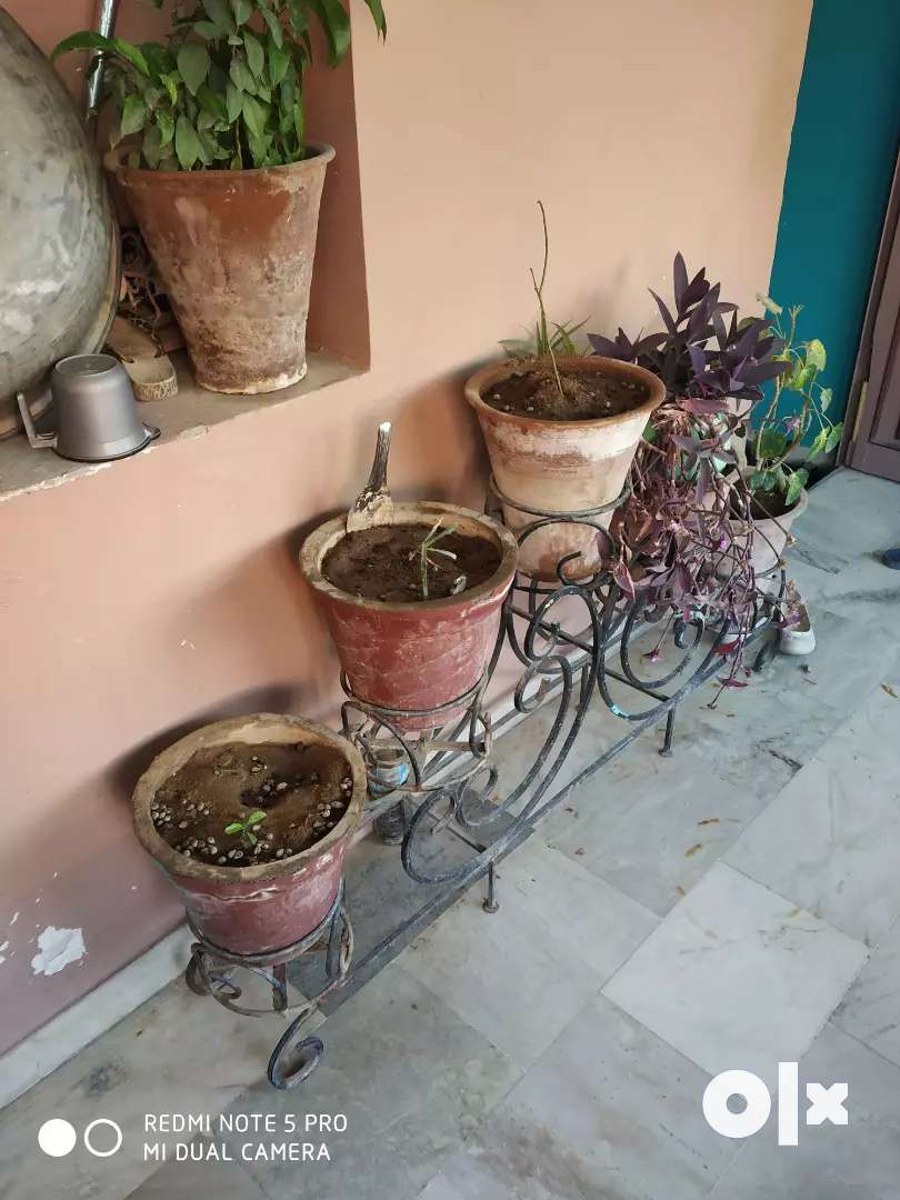 20 Plants with pots and 03 stands 0