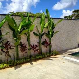 taman minimalis, kolam,servise tanaman