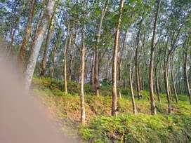 1.40 acre rubber plantation for sale
