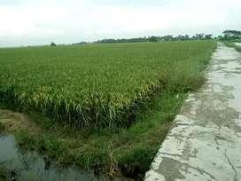 Jual Tanah Zona Kuning Cocok Rumah Subsidi