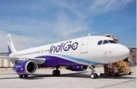 Job requirements in indigo airline